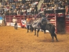 2013-SLE-Rodeo-022