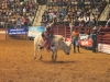 2013-SLE-Rodeo-025