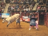 2013-SLE-Rodeo-026